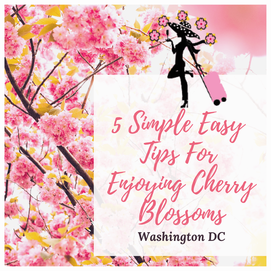 Always5Star 5 Simple Easy Tips for Enjoying Cherry Blossoms in Washington DC