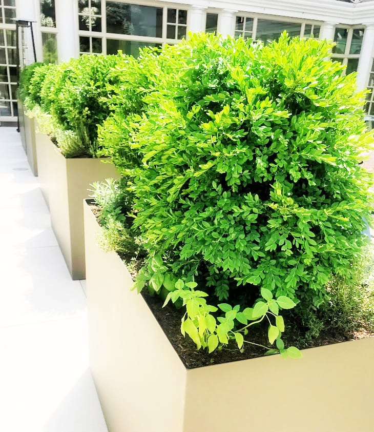 The planters have spices that is used in the kitchen