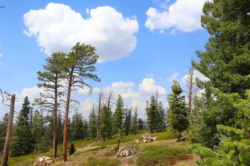 Best Places To Visit From California to Utah: Among the trees, I saw a sign to beware of bears!